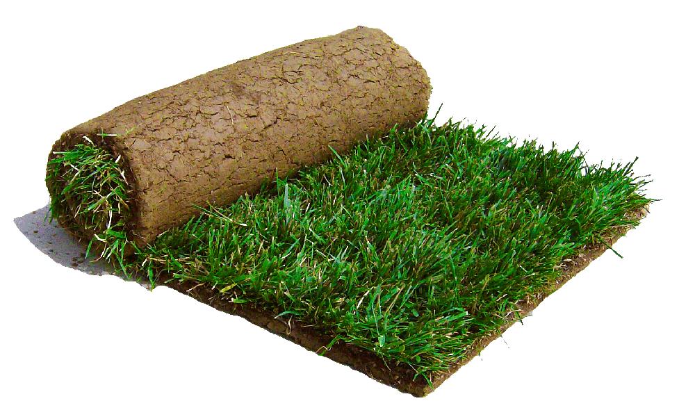 Rulo Çim Tohum Çim Uygulaması